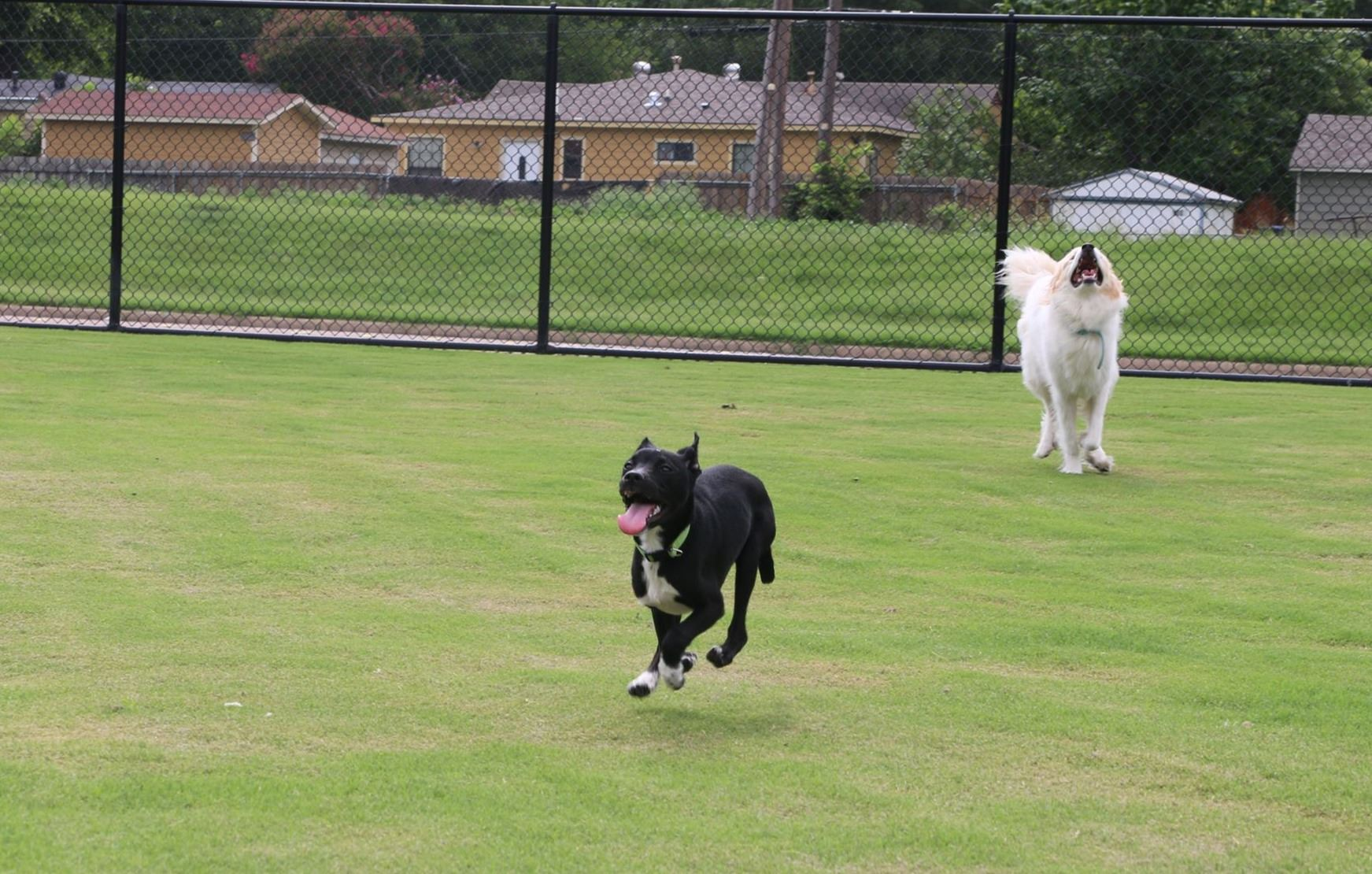 Garland Dog Park, two dogs running